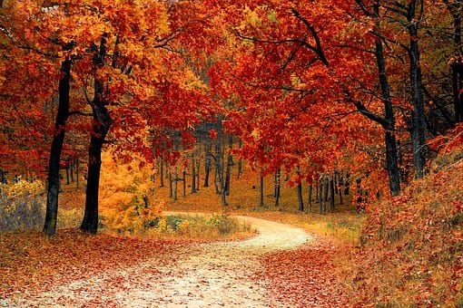 fall leaves on a dirt road