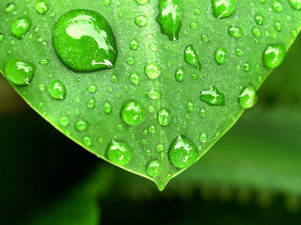 dew drops and humidity